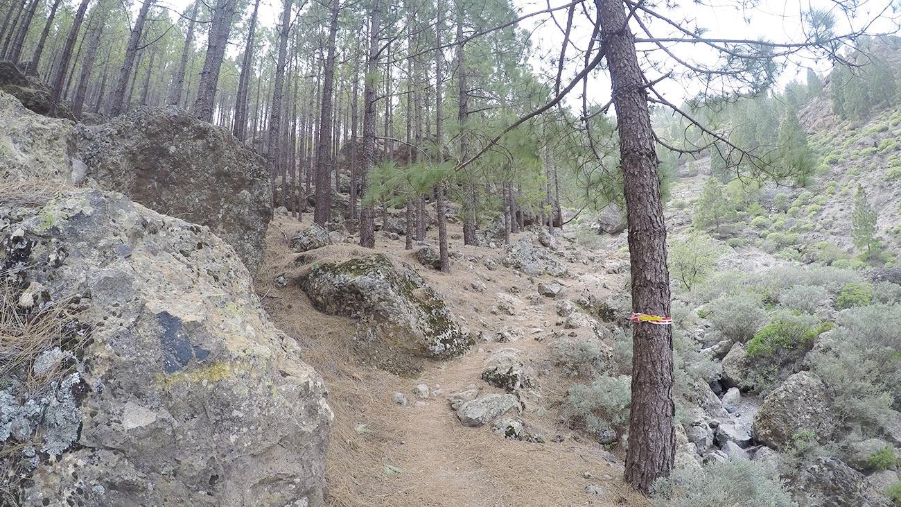 Wunderschöne Trails führen nach oben.