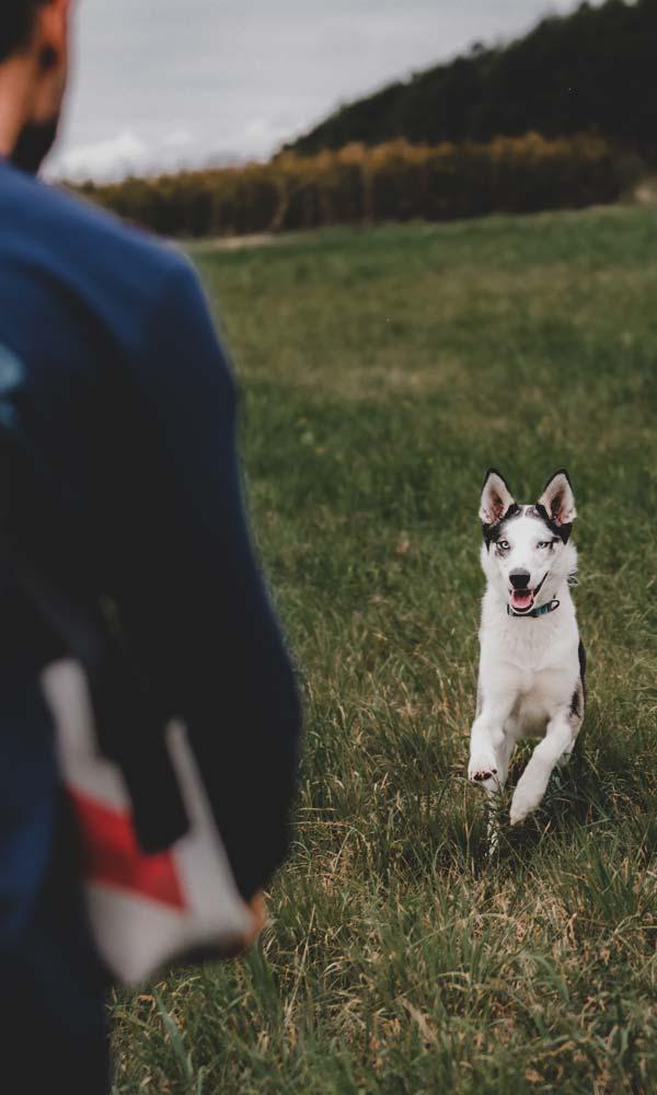 Grundausbildung Hundeschule Einzelstunde