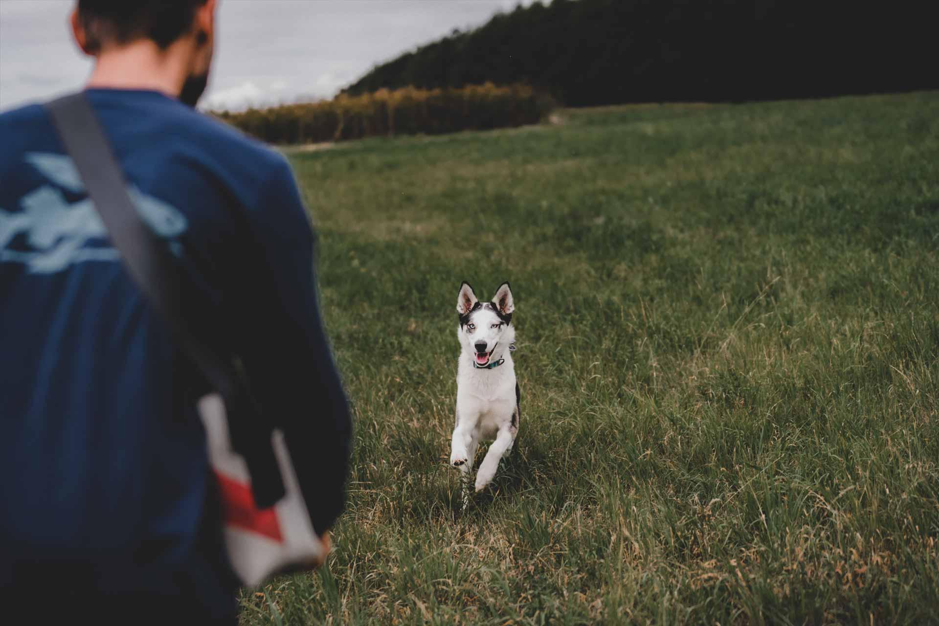 Hundeschule Grundausbildung Einzelstunde