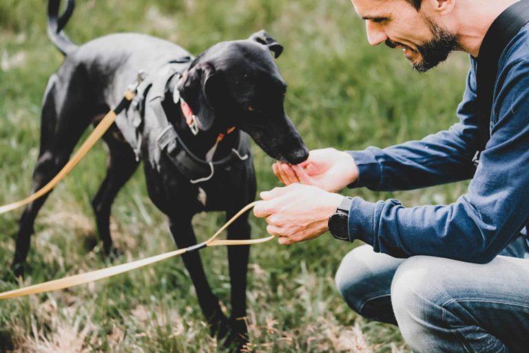 Positive Verstärkung beim Hundetraining