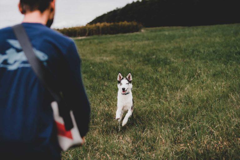 Rückruf Training Hundeschule