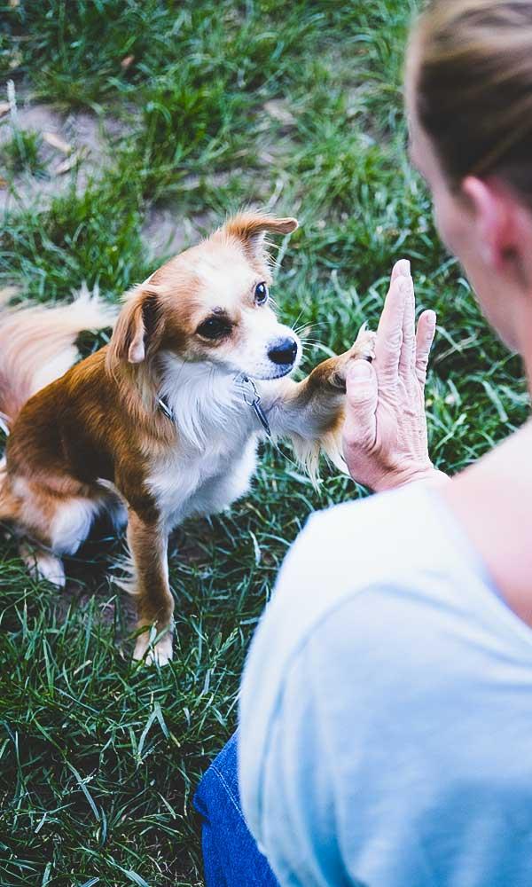 Therapie mit Hunden
