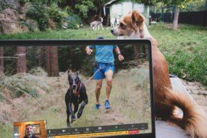 Grundlagen Zughundesport Webinar Canicross