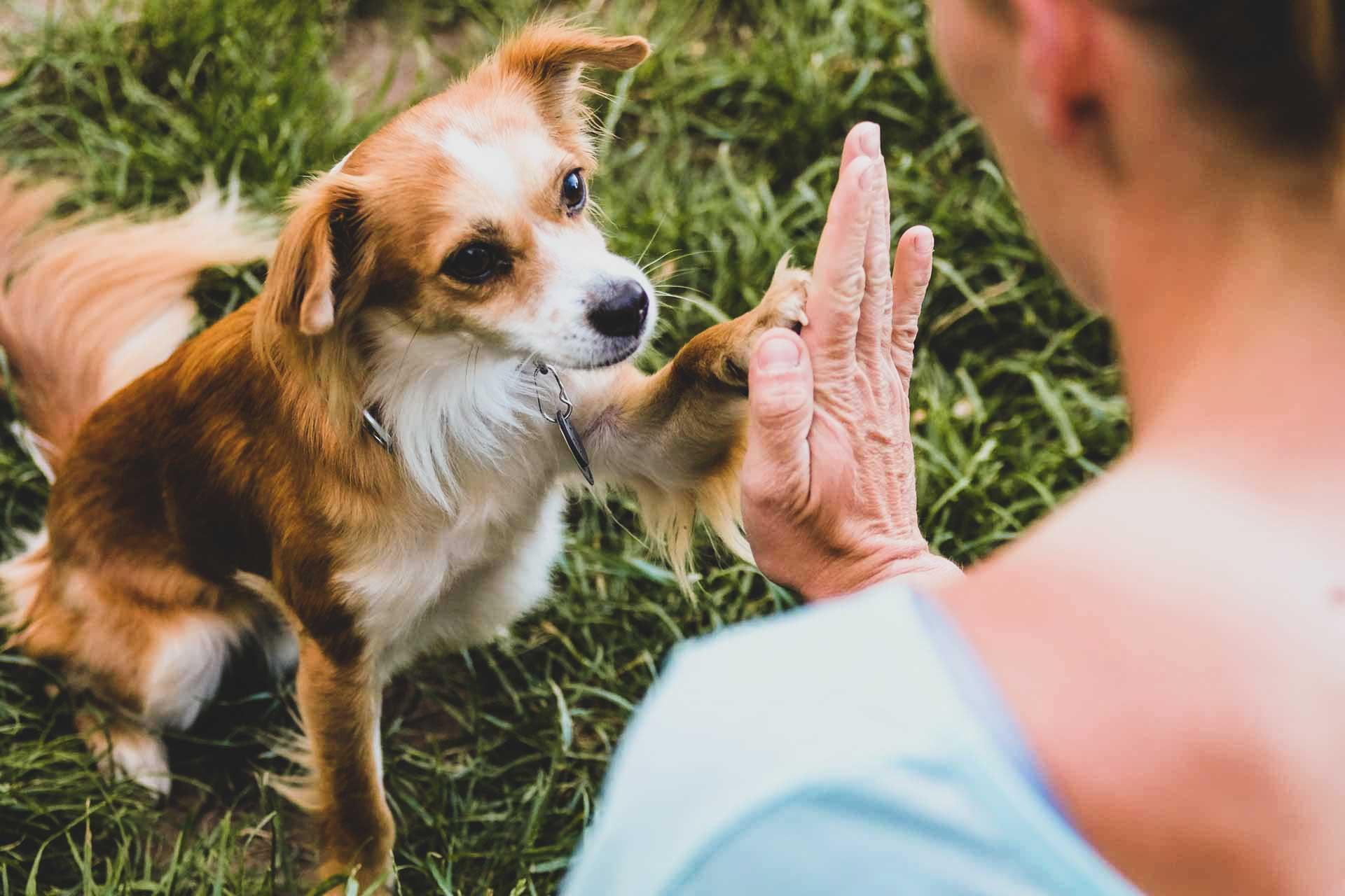 dogemy - Tiergestützte Therapie