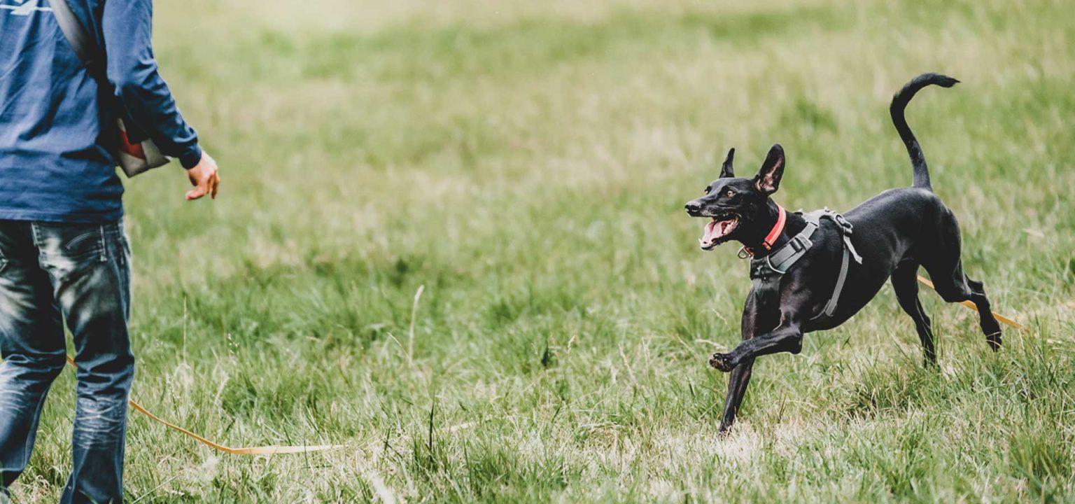 Hundeschule Odenwald