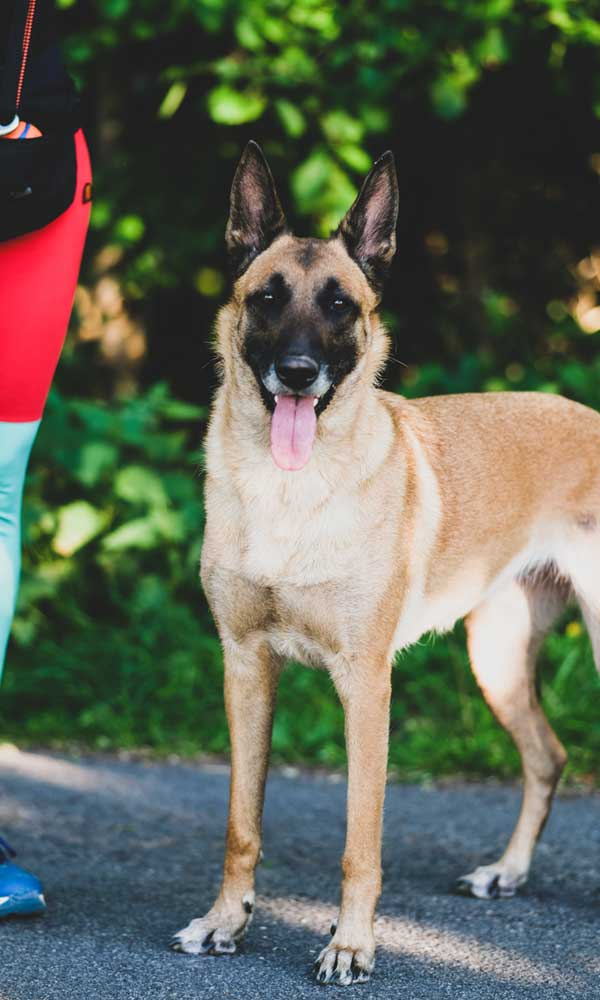 Hundeschule - Ausbildung aller Rassen