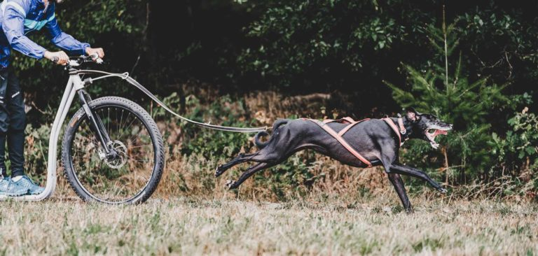 Dogscooter Kursangebot im Odenwald
