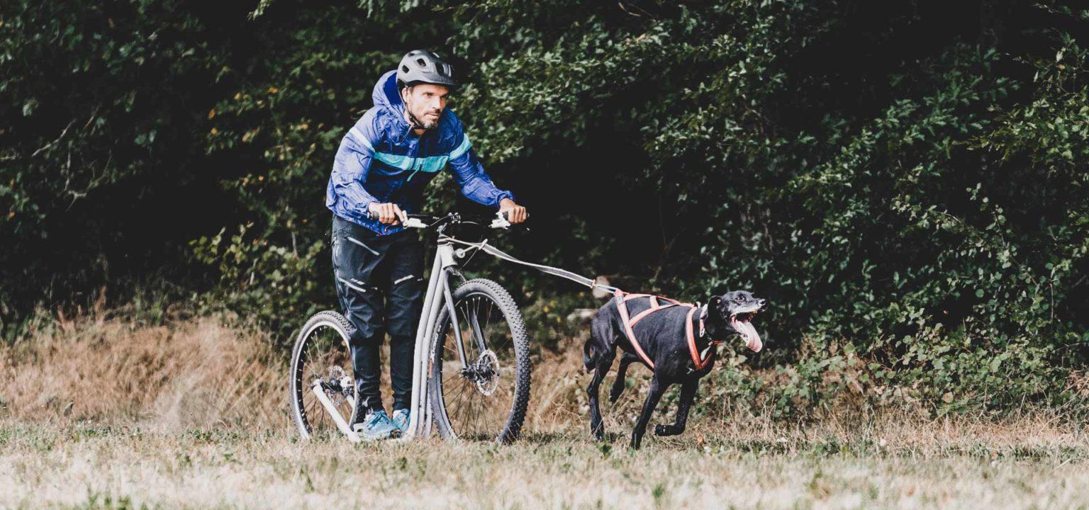 Dogscooter im Odenwald bei dogemy