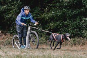 Dogscooter Einzelstunde